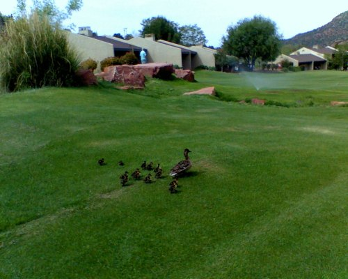 Our Family of Ducks