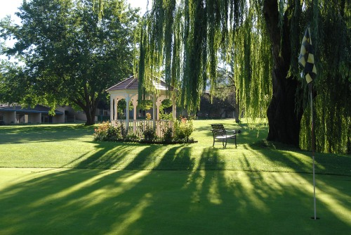Lovely Weeping Willow Tree above the Golf Course Gazebo