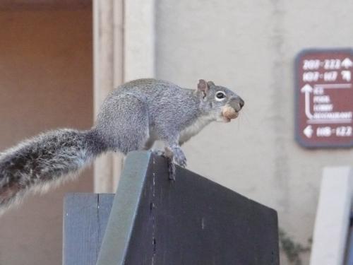 Our Friendly Poco Squirrels