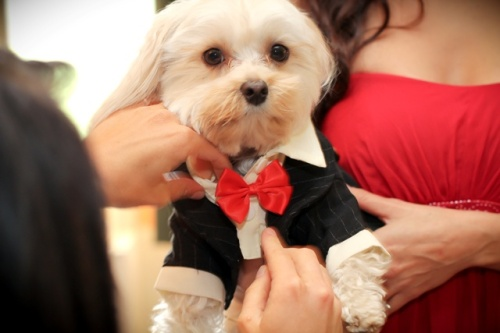 Adorable Dexter was the ring bearer! Photo by Love My Life Photography